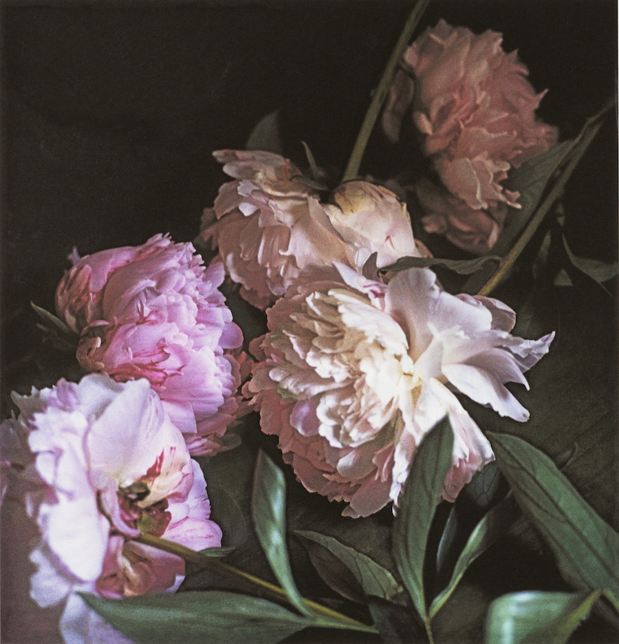 Craigie Horsfield,  Five Peonies (1), 2015, dry print on Arches paper, cm 39 x 37,5, cm 66,5 x 53,5 framed, unique print, Courtesy of Monica De Cardenas