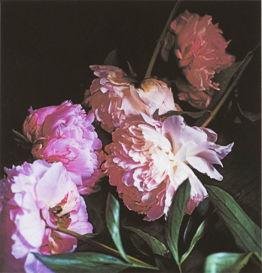 Craigie Horsfield,   Five Peonies (2),   2015,   dry print on Arches paper,   cm 39 x 37,  5,   cm 66,  5 x 53,  5 framed,   unique print,   Courtesy of Monica De Cardenas