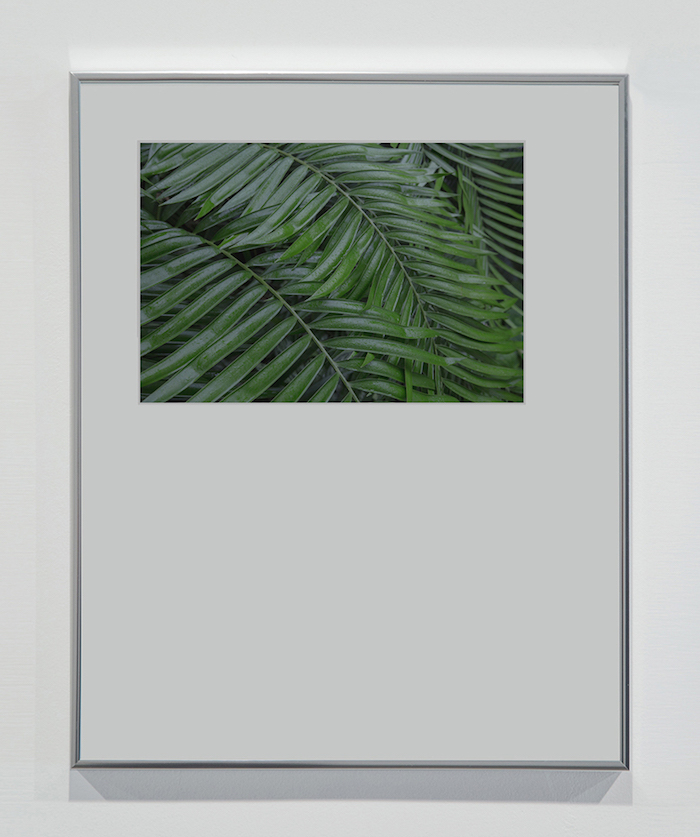 Matteo Cremonesi,   Plants,   2015,   photopaper - Appartamento,   Nowhere Gallery,   Milano