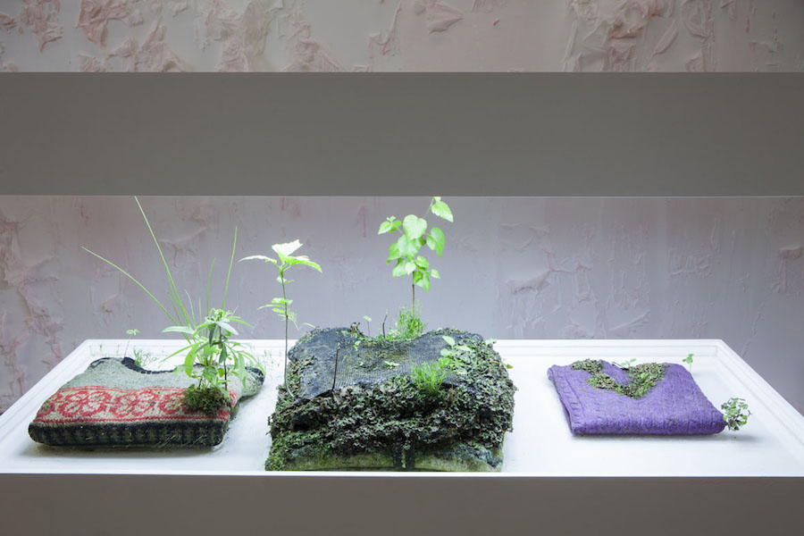 Michel Blazy,   Pull over time,   2013,   pullover,   sweatshirts,   plants,   water.