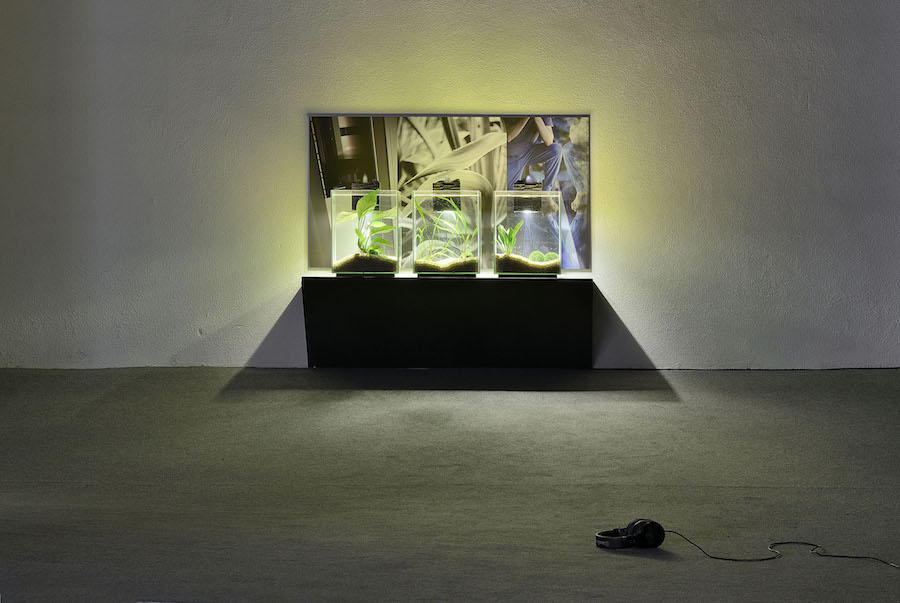 Tris Vonna-Michell Wasteful Illuminations: audio poems (detail),   2016 Installation consisting of soundtrack on headphones,   three aquariums on a shelf,   and archival inkjet print audio: 10 min. 43 sec. Courtesy of the Artist and T293. Photo credit: Roberto Apa.