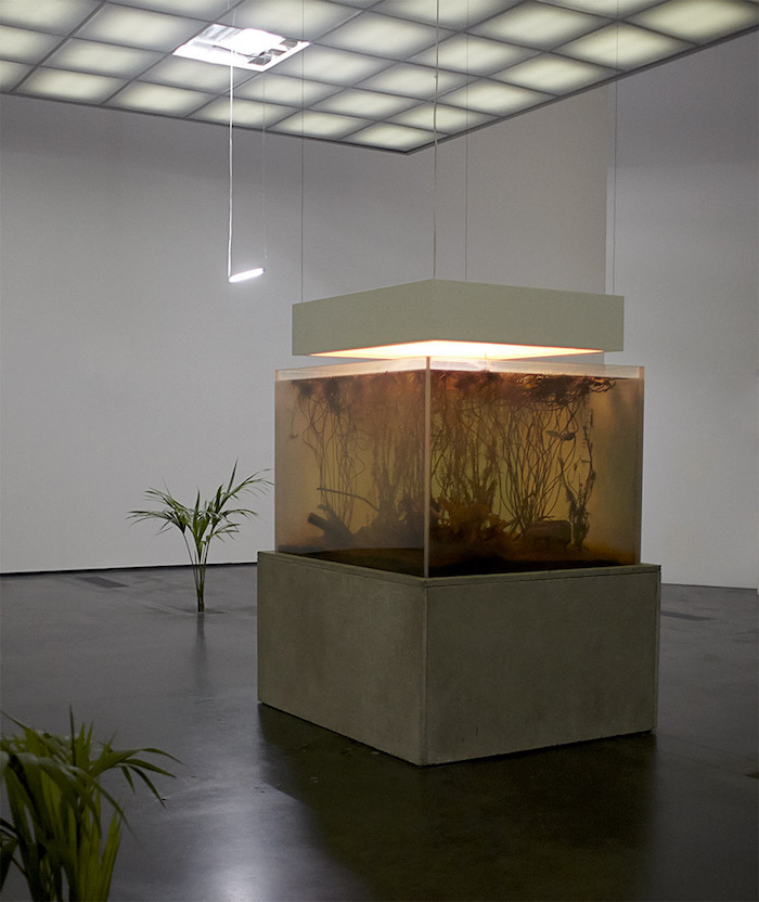 Nympheas transplant de Pierre Huyghe. Photo Ola Rindal