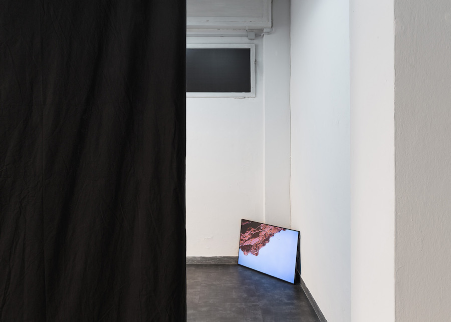 Emilio Vavarella - Animal Cinema, 2017 - Installation view - Gallleriapiù Bologna