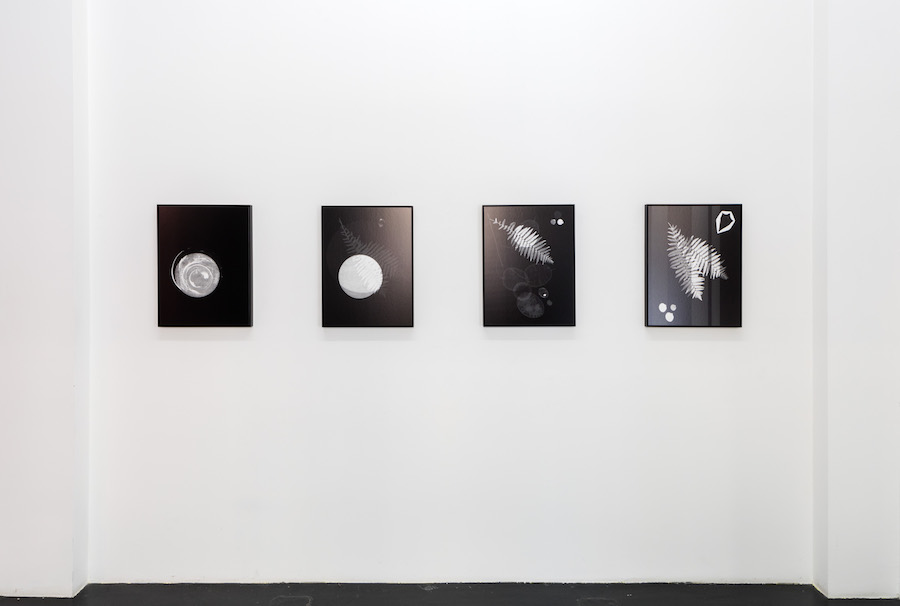 Meris Angioletti, D-76, Lunaria#2, 2017-2018, gelatin silver photograms transferred on photo paper, 45x60 cm each, ed. 1+2AP. Courtesy Otto Zoo. Ph. Ugo Dalla Porta