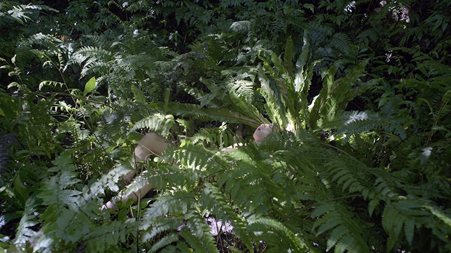 Zheng Bo, Pteridophilia 1, 2016. Video (4K, color, sound), 17 min. Courtesy the artist.
