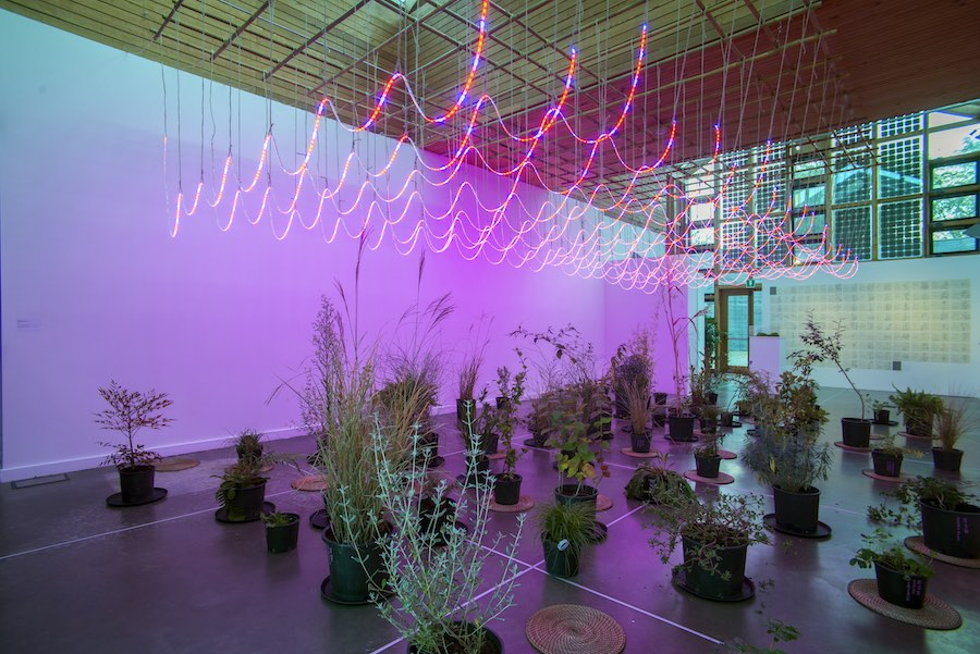 Zheng Bo, WEED PARTY III, 2018 - Installation view at PAV – Parco Arte Vivente  - Photo Alessio Anastasi - Courtesy the Artist and PAV – Parco Arte Vivente